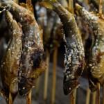 魚介類は勉強効率を加速させるブースター!楽々摂取3つの簡単レシピ