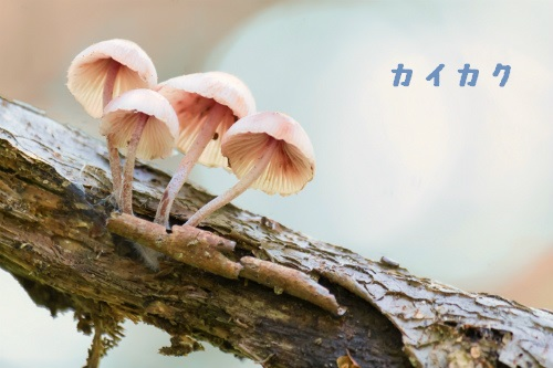 SHI68_karekinihaetakinoko500