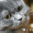SUN85_iatuneko1255500
