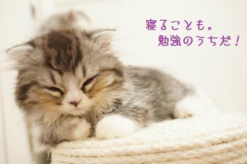 寝るのも勉強
