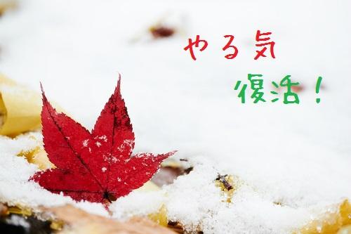 OH96_yukinonakanomomiji500