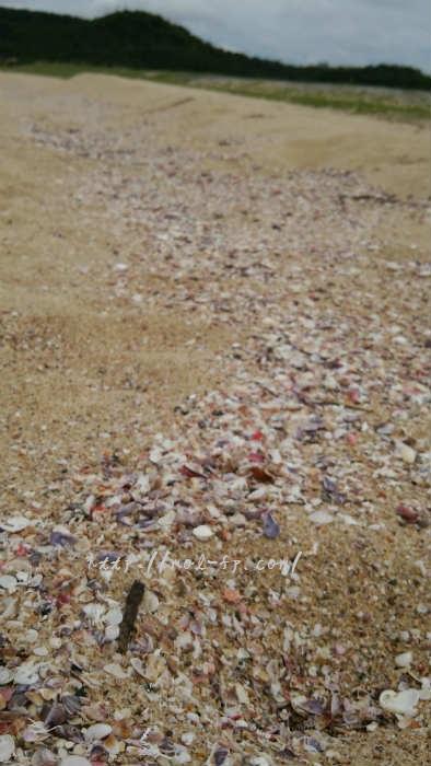 琴引浜で貝拾い(ビーチコーミング)
