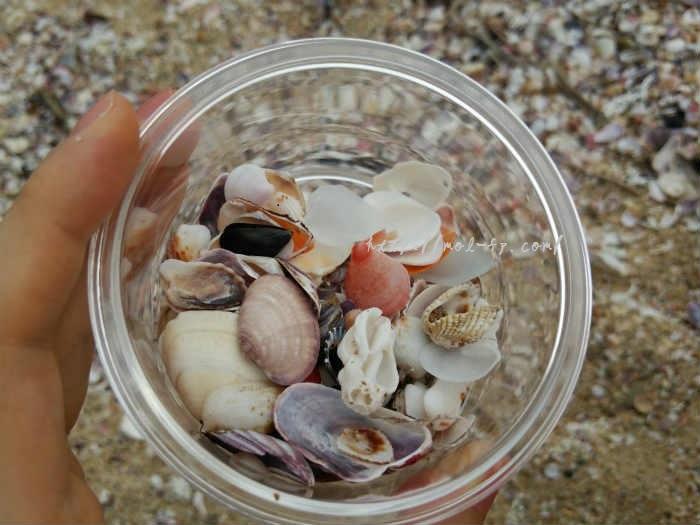 琴引浜で拾った貝殻たち