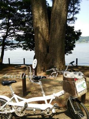 天橋立の夫婦松と二人乗り自転車
